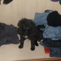 Verstecken im Schrank